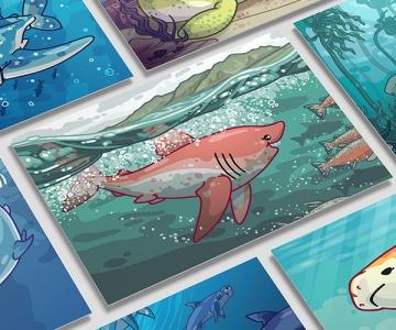 Shark Species Illustrations